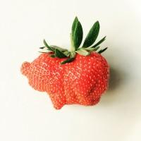 Erdbeer-Schweinchen_ursula_lüthi