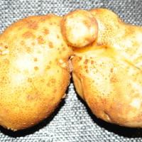 Kartoffel_0410